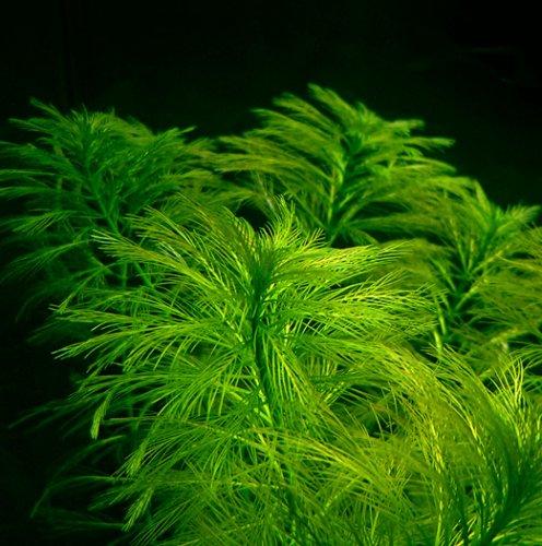 Аквариумные растения: фото