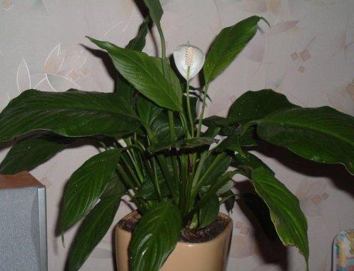 Болезни домашних растений с