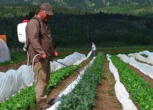 защита овощей от вредителей и