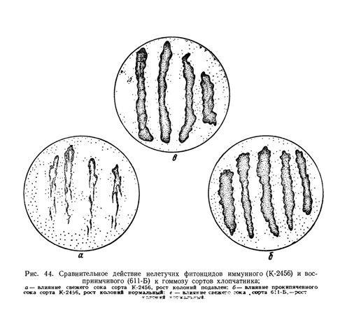 Иммунитет растений к болезням