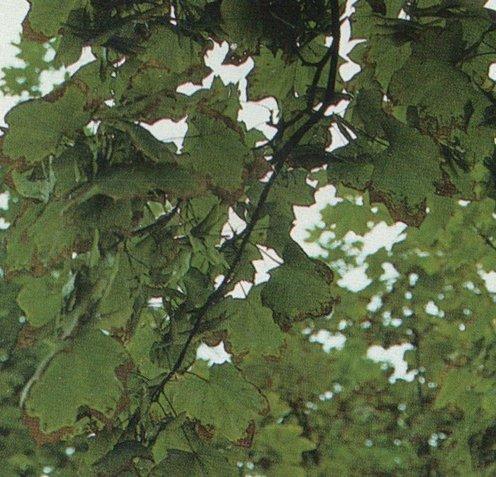 Иммунитет растений к