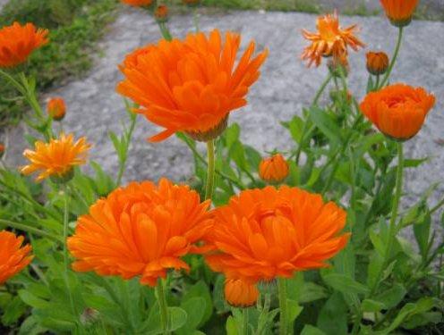 Инсектицидные растения против
