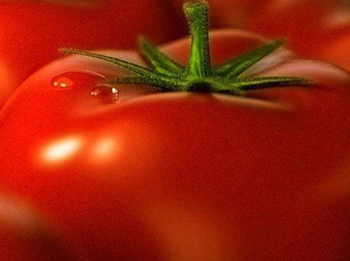 Sorta-tomatov-12.jpg