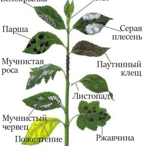 Все болезни листьев растений